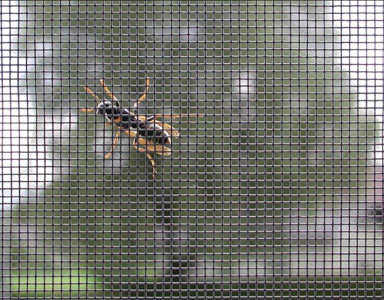 Insektenschutz-allgemein_01